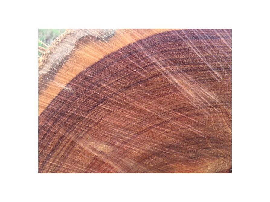 5 loại gỗ cẩm phổ biến ở việt nam